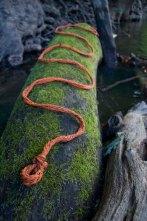 A piece of Potomac trash art slithers over a moss-covered log.