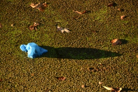 Late afternoon n a bed of duckweed.