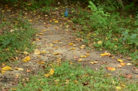 A poop bag contemplates a fork in the trail.