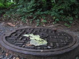 Flattened on a storm sewer cover.