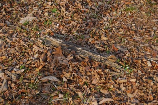 Just a mat of dead leaves and a piece of rotted limb. But something lay underneath.
